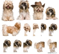 小狗的各种姿势特写
