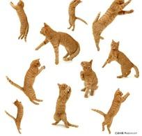 各种动作姿势的黄色小花猫