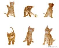 各种动作姿势的黄色小猫
