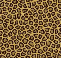 豹纹斑点高清图片