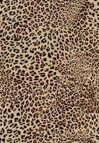 豹纹高清图片