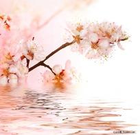 粉红色桃花和水面倒影