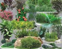 园林植物PS分层素材