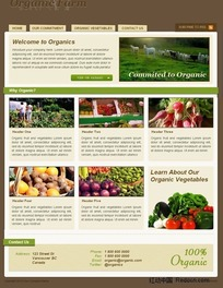 蔬菜网站界面设计HTML(CSS)模板