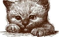 线描猫咪矢量素材