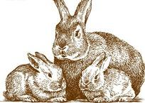 线描兔子矢量素材