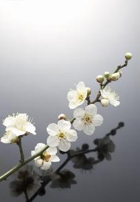 一支白色的桃花