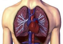 心脏神经官能症吃啥药