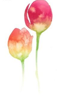 水彩红色花苞