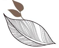 时尚线描树叶