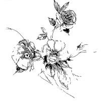 线条手绘植物花朵