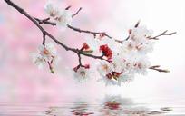美丽桃花图片