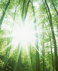 透过绿色森林的刺眼阳光