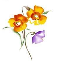 手绘黄色罂粟花与紫色小花