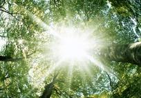 透过红色枫树的刺眼阳光图片
