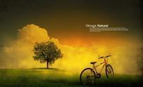 树与自行车的怀旧图片