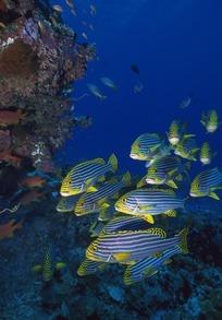 壁纸 海底 海底世界 海洋馆 水族馆 204_293图片