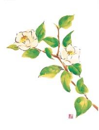 手绘红色山茶花与叶子图片图片