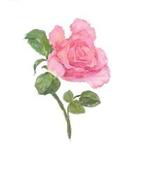绿色杯子里的白色玫瑰花 绿色花瓶里的白色玫瑰花 一朵粉色的玫瑰花和图片