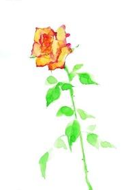 一枝黄色的玫瑰花