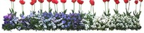 红色郁金香和蝴蝶兰