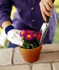 右手戴手套左手拿铲子整理花盆的人