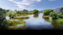 生态公园湿地psd效果图