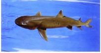 大海中的鲨鱼PSD素材