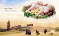 盘子里的鸡肉和草地上散养的鸡
