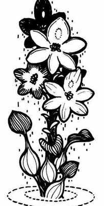 水葫芦花手绘黑白图案