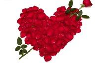 红玫瑰与花瓣拼成的红心图案
