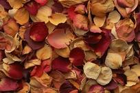 落在地上的花瓣特写