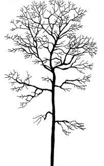 树简笔画黑白效果图psd下载 682369