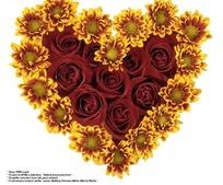 非洲菊与红玫瑰花组成的心形图案