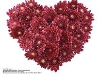 红色非洲菊花组成的心形图案