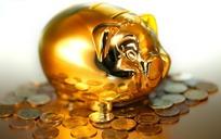站在硬币中三孔的金猪储钱罐