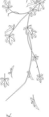 手绘4片植物枫叶