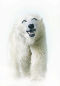 微笑着的北极熊创意图片图片