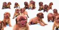 各种姿态的狗的拼图