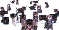 各种姿态的猫的拼图