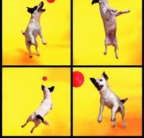 玩球的狗的四张拼图