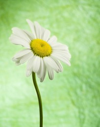 墨色叶子下的丝瓜水墨画图片_花纹花边图片图片