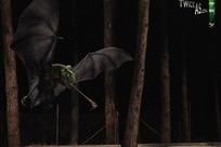 国外蝙蝠吃虫主题杀虫剂创意广告图片