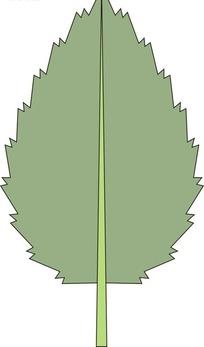 手绘锯齿状边缘的灰色叶子图片