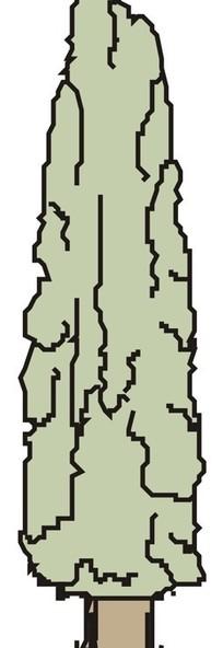 手绘一棵三角形形状的树