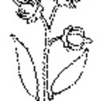 花朵和叶子构成的简单图形