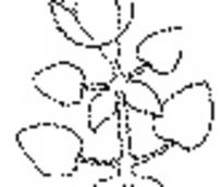 花朵/叶子构成的简单花纹