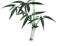 墨绿色竹叶的竹竿水墨画图片