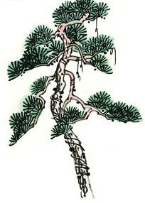 树叶稀少的松树水墨画图片