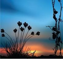 落日霞光里的藤枝花草